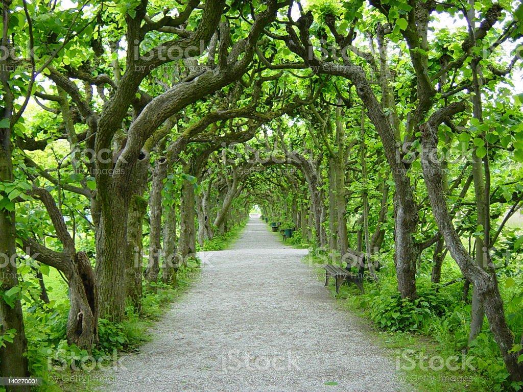 Tree walk in Dachau stock photo