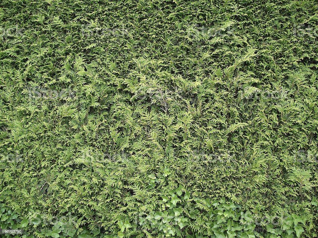 tree wall 3 royalty-free stock photo