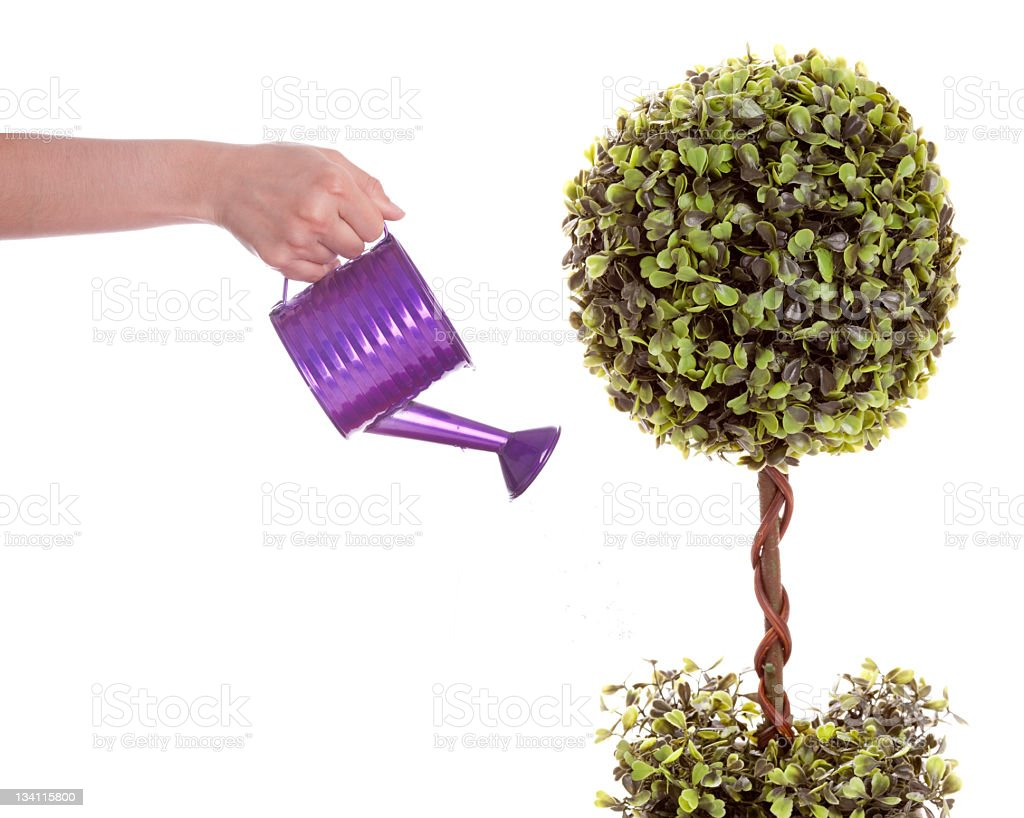 Tree Watering royalty-free stock photo
