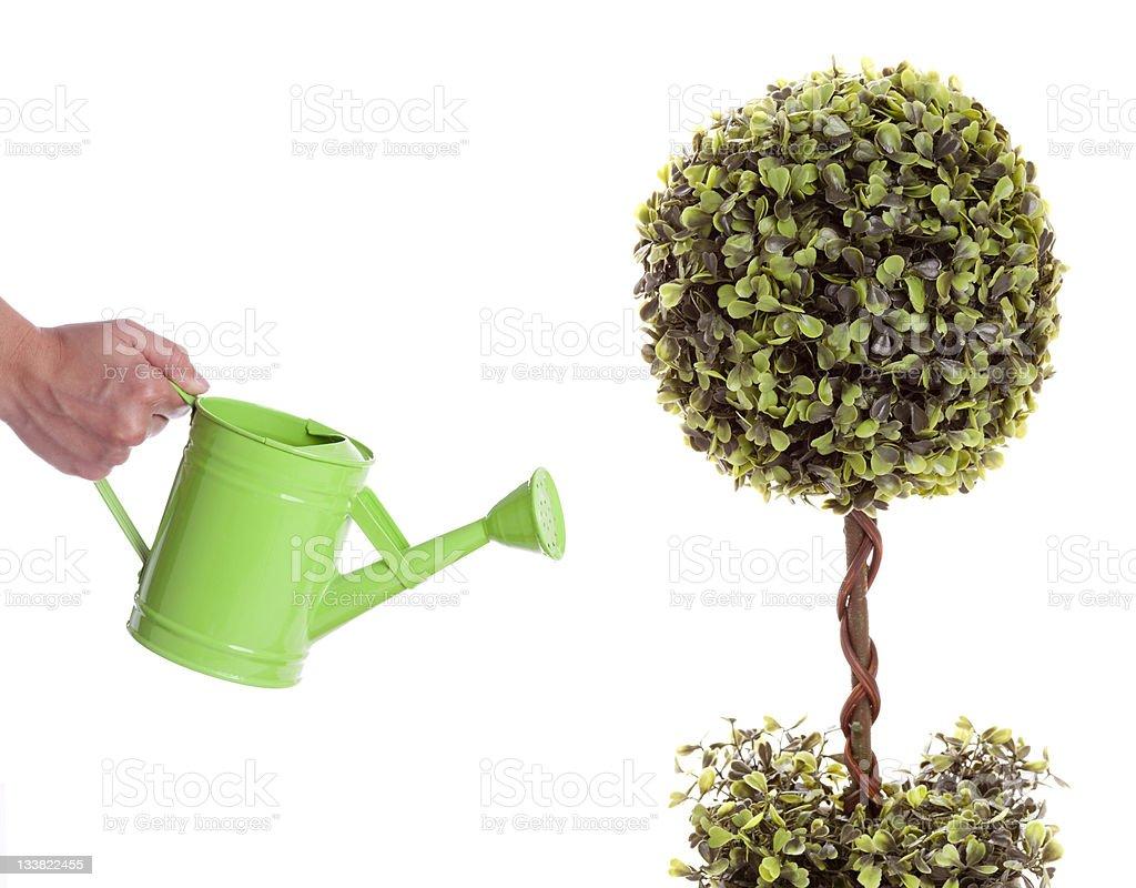 Tree Watering Summer royalty-free stock photo