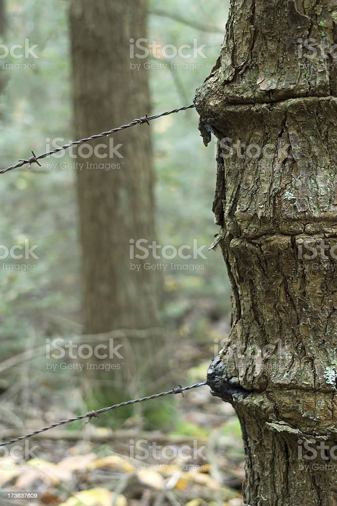 Tree Wire royalty-free stock photo