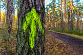 Tree with a green arrow in a wood