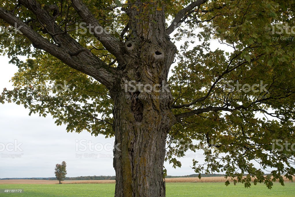 Tree With a Screaming Face on the Trunk stock photo