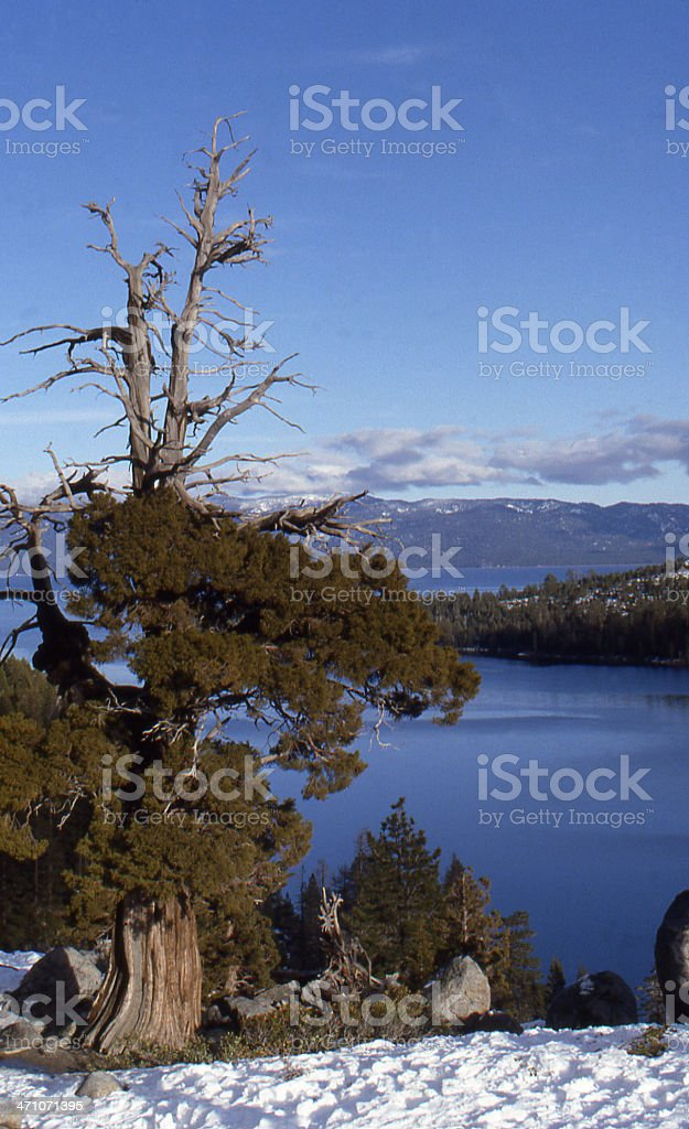 Tree with a View stock photo