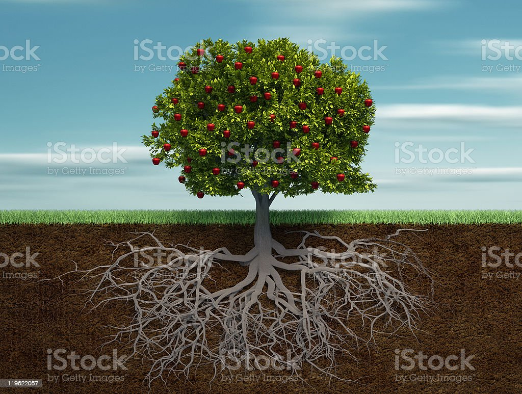 Tree with apple stock photo