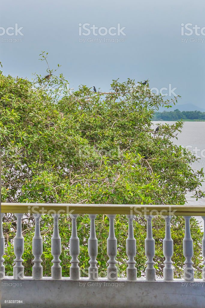 Tree with Birds at Guayas River in Guayaquil Ecuador stock photo