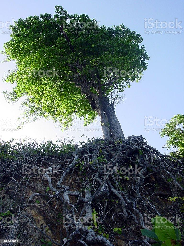 Tree with blue sky royalty-free stock photo