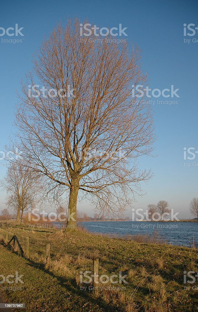 Tree with clear blue winter sky stock photo