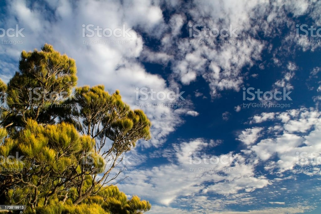 Tree with Cloudy sky Background, Australia. royalty-free stock photo