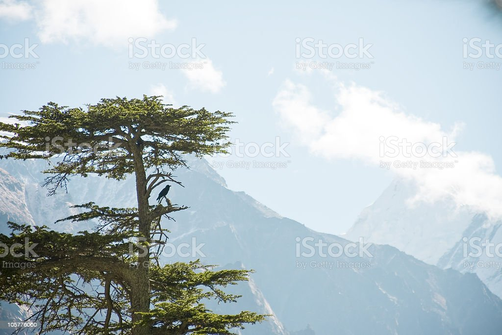 Tree with Crow in the mountains stock photo