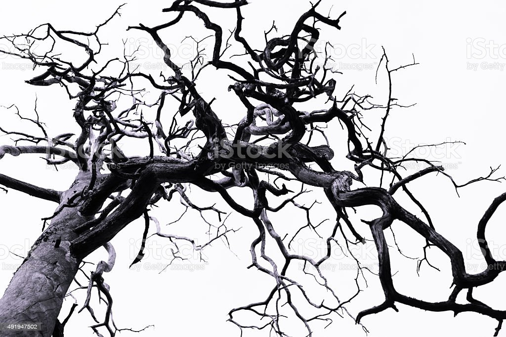 Tree with curved branches stock photo