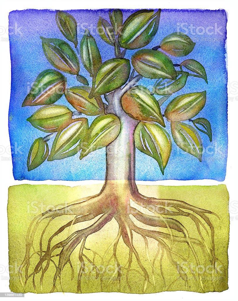 Árbol con raíces profundas foto de stock libre de derechos