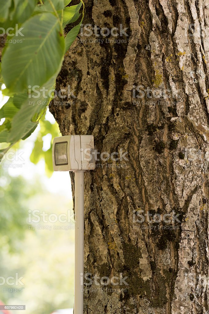 tree with electrical outlet stock photo