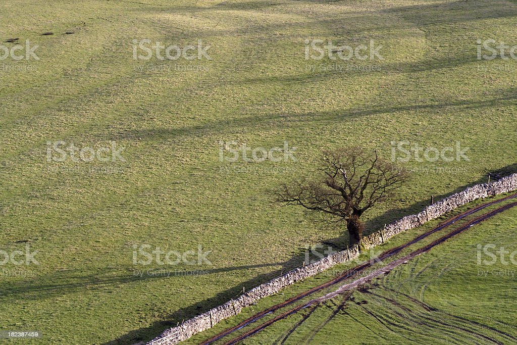Tree with Field stock photo