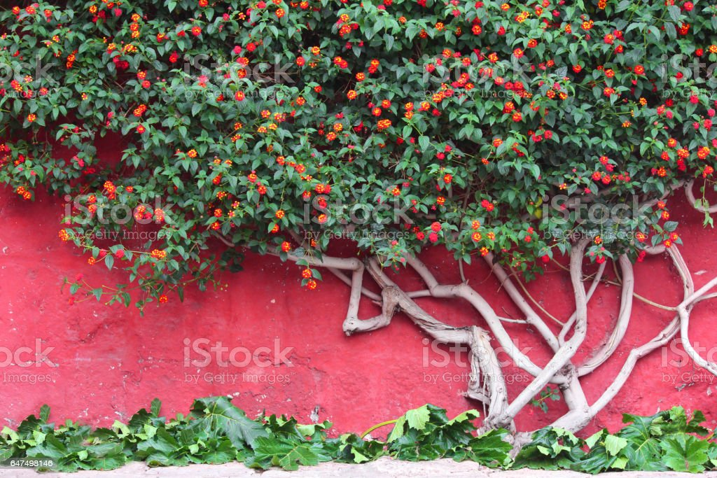 Tree with flowers against a red wall stock photo