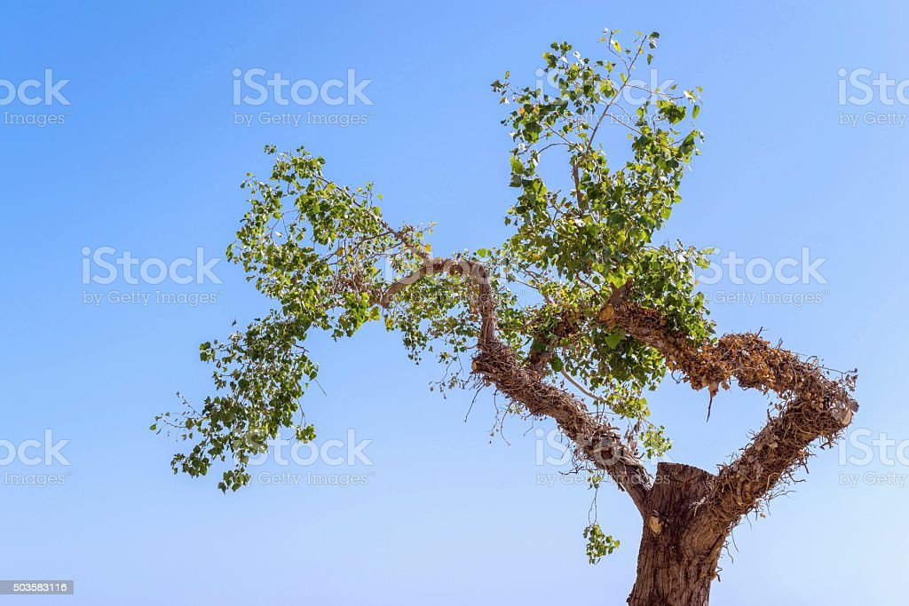 tree with foliage separately against the sky stock photo