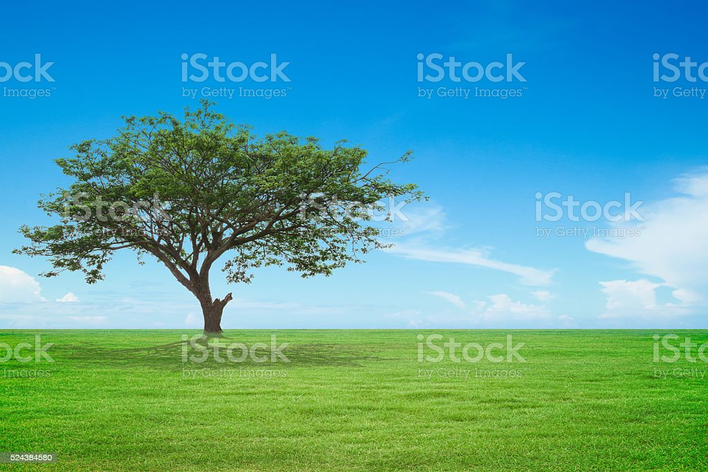 tree with green field and blue sky stock photo