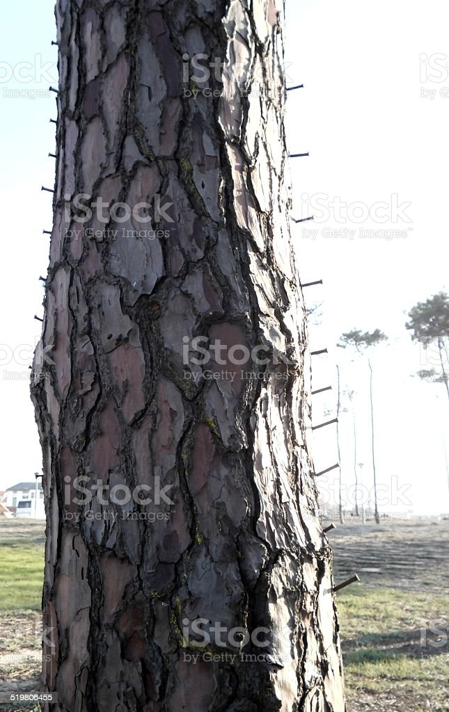 Tree With Nails Sticked stock photo