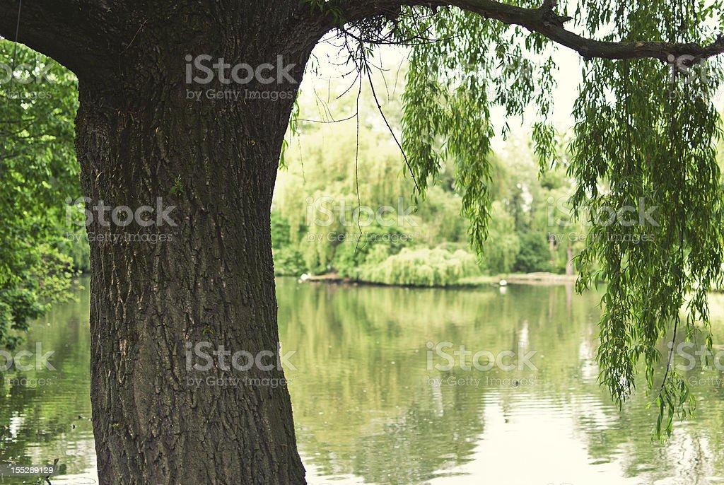 Tree with Pond stock photo