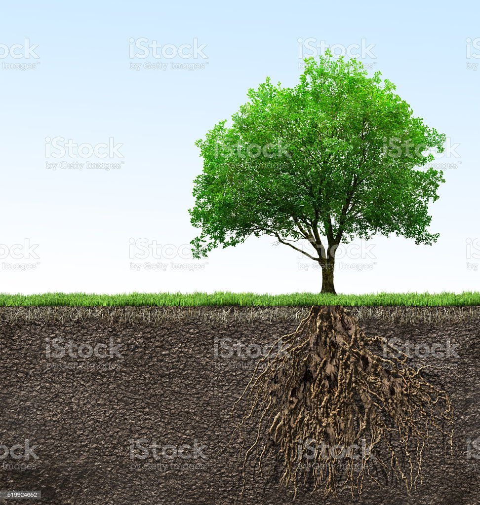 tree with roots stock photo