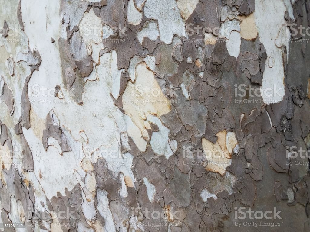 tree with rough layered grey bark stock photo