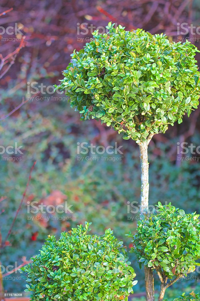 Tree with round bushes stock photo