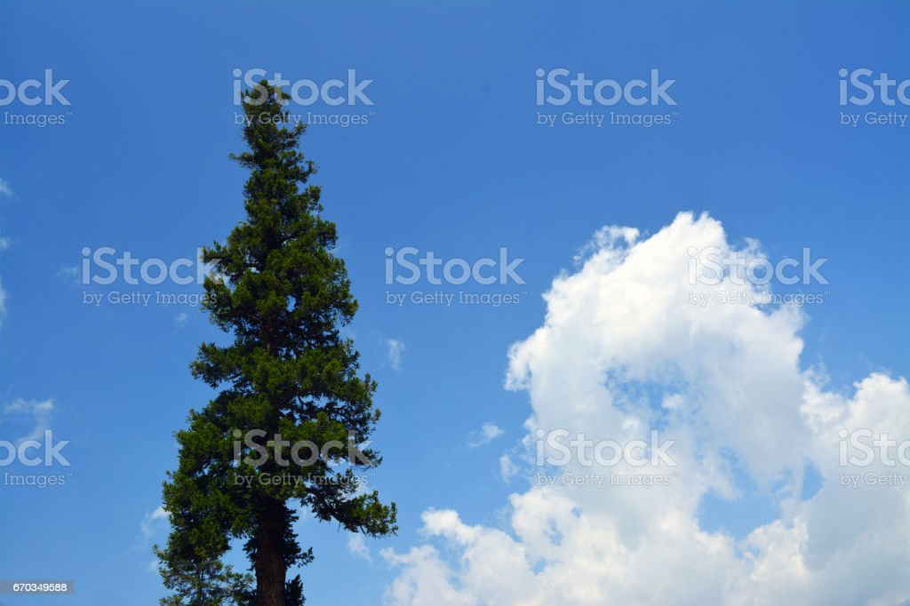 Tree with sky stock photo