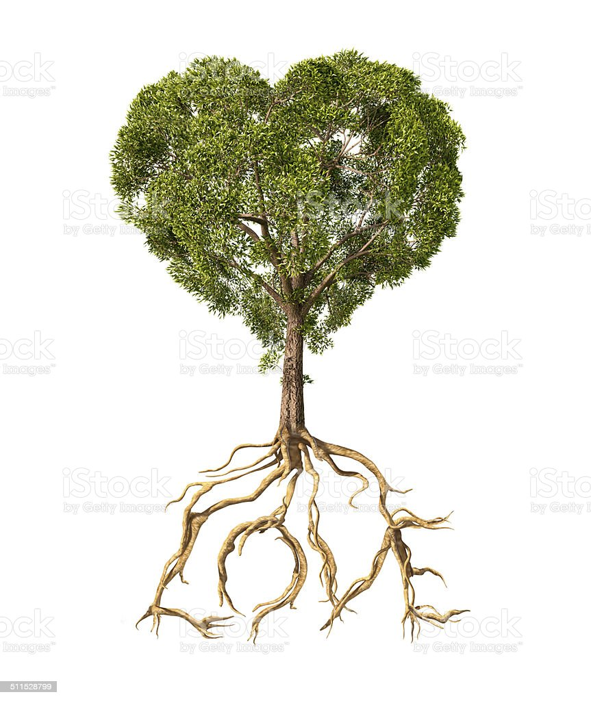 Tree with the shape of heart and roots as Love stock photo