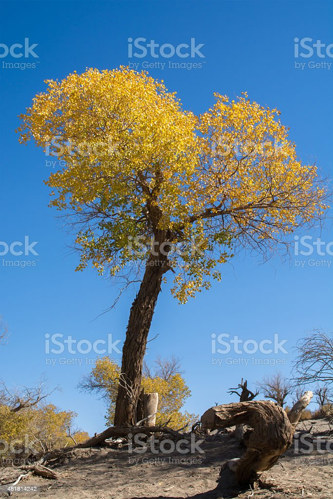 Tree with yellow leaves stock photo