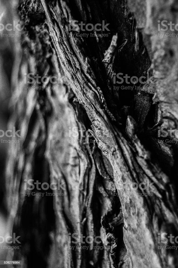 tree wood , close up stock photo