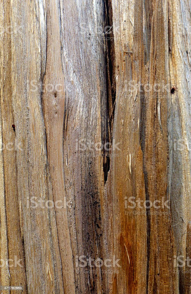 Tree wood with a cut texture royalty-free stock photo