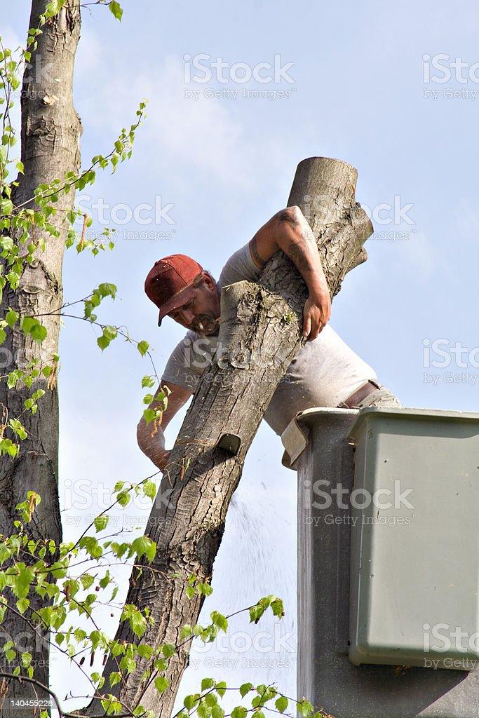 Tree Work royalty-free stock photo