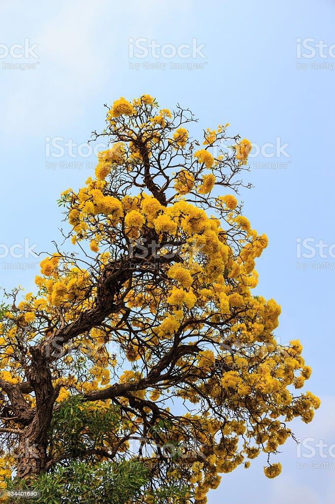 tree yellow on blue sky soft focus stock photo