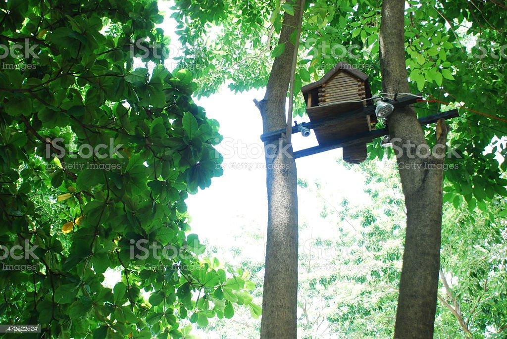Tree01 royalty-free 스톡 사진