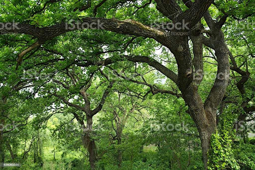 tree,clearing,forest,nature stock photo