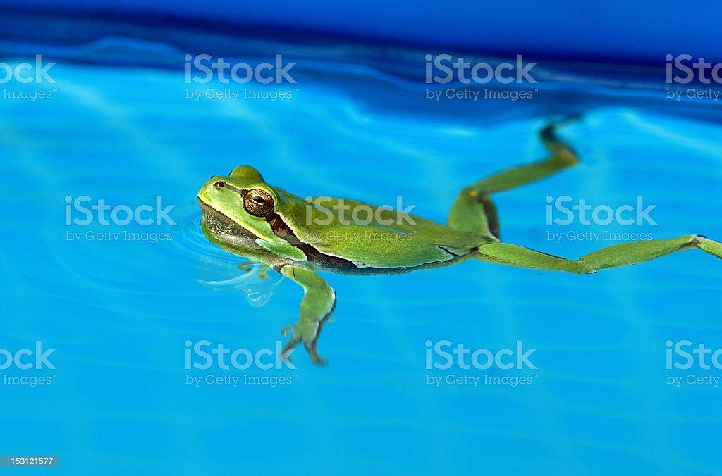 tree-frog royalty-free stock photo