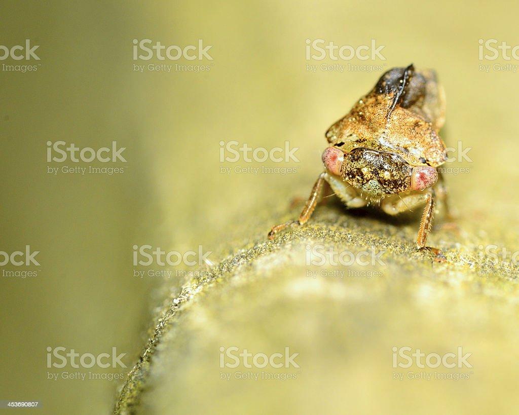 Treehopper royalty-free stock photo