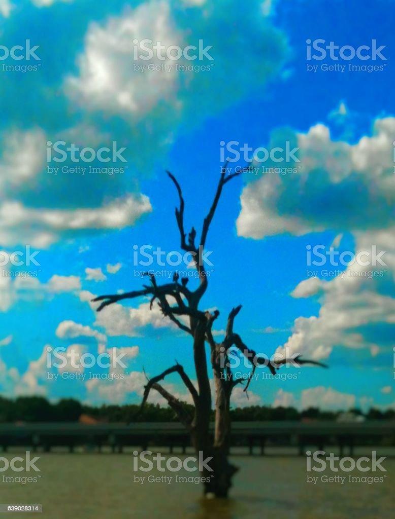 TreeLake stock photo