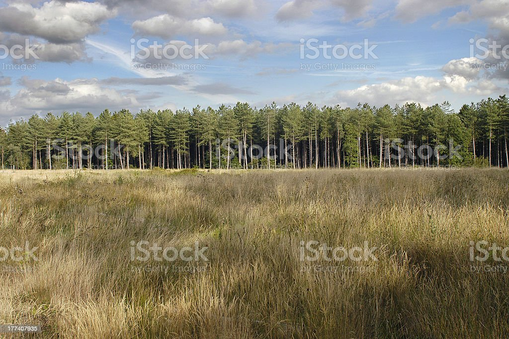Treeline at Edge of timber forest stock photo