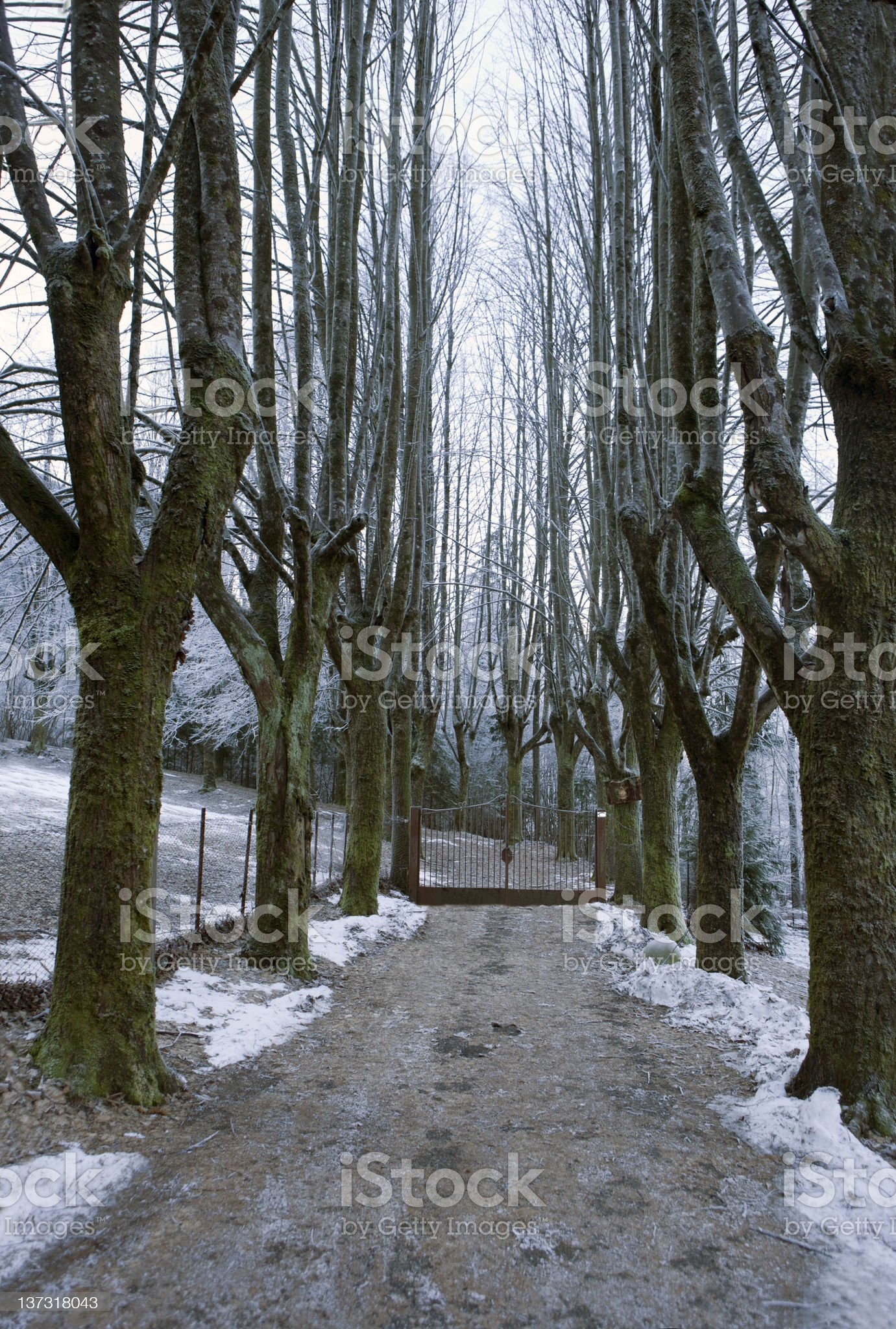 Tree-lined avenue withh gate royalty-free stock photo