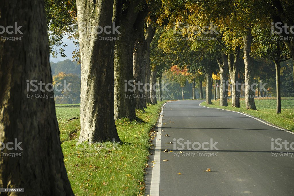 treelined country road in autumn royalty-free stock photo