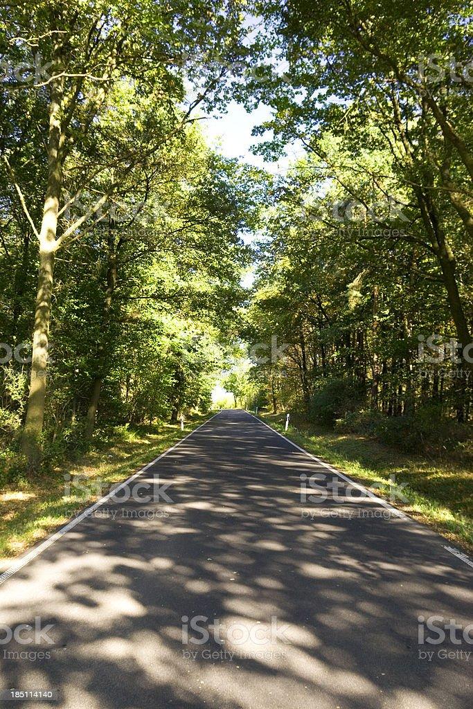 Treelined Country Road royalty-free stock photo