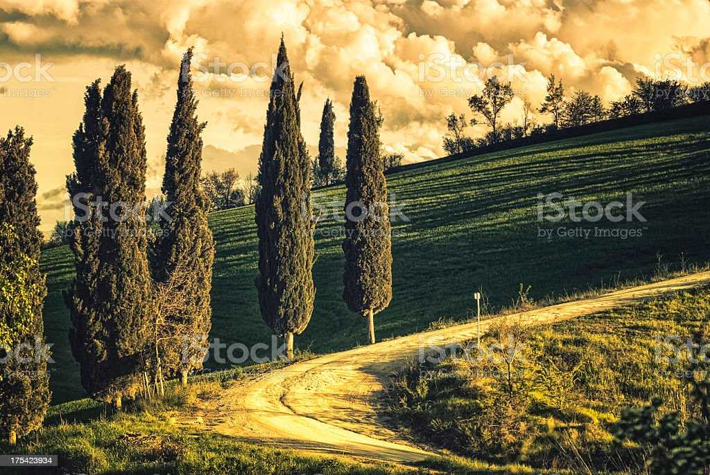 Treelined Country Widing Road In Val D'Orcia royalty-free stock photo