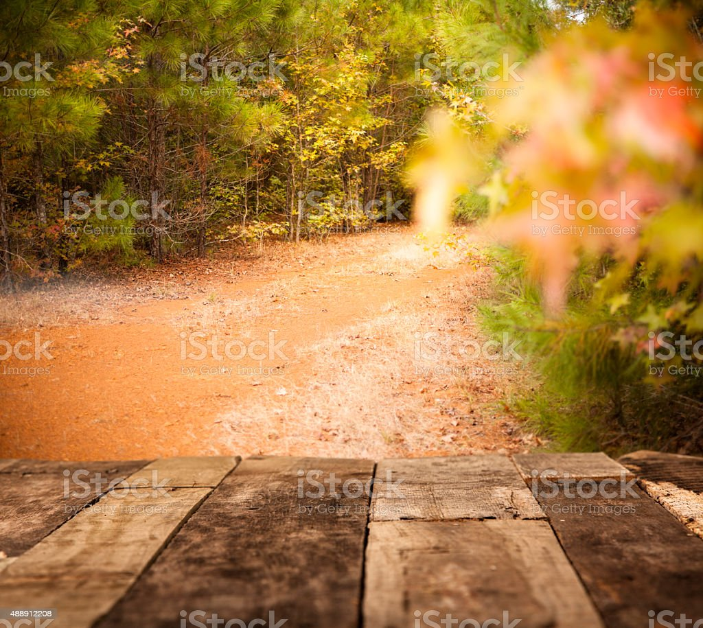 Tree-lined, dirt path. Wooded, forest area. No people. Autumn season. stock photo