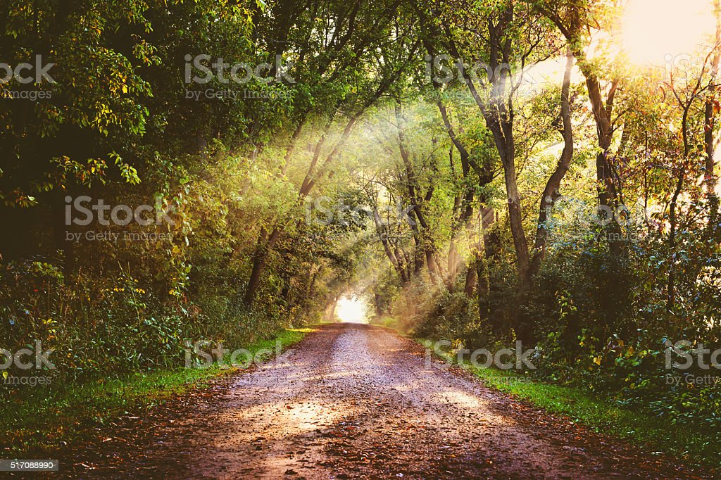 Treelined dirt road with sunbeams stock photo