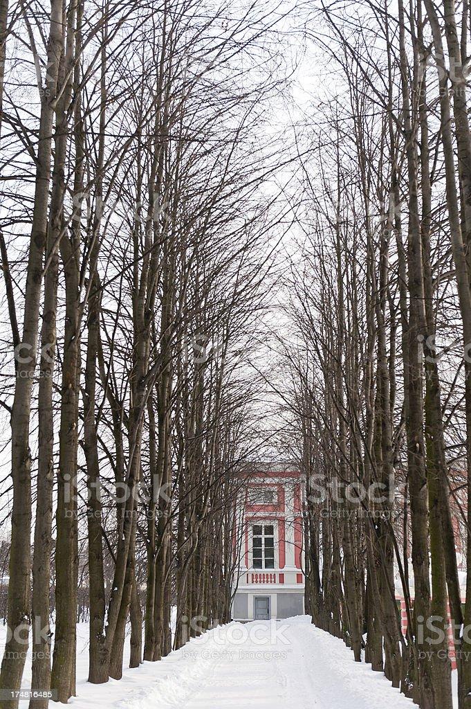 Tree-lIned Drive royalty-free stock photo