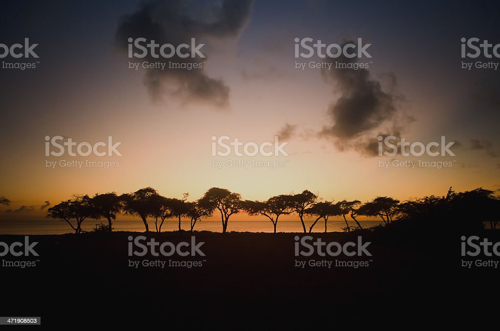 treelined golden sunset royalty-free stock photo