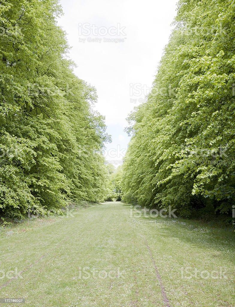 Tree-Lined Grassy Path royalty-free stock photo