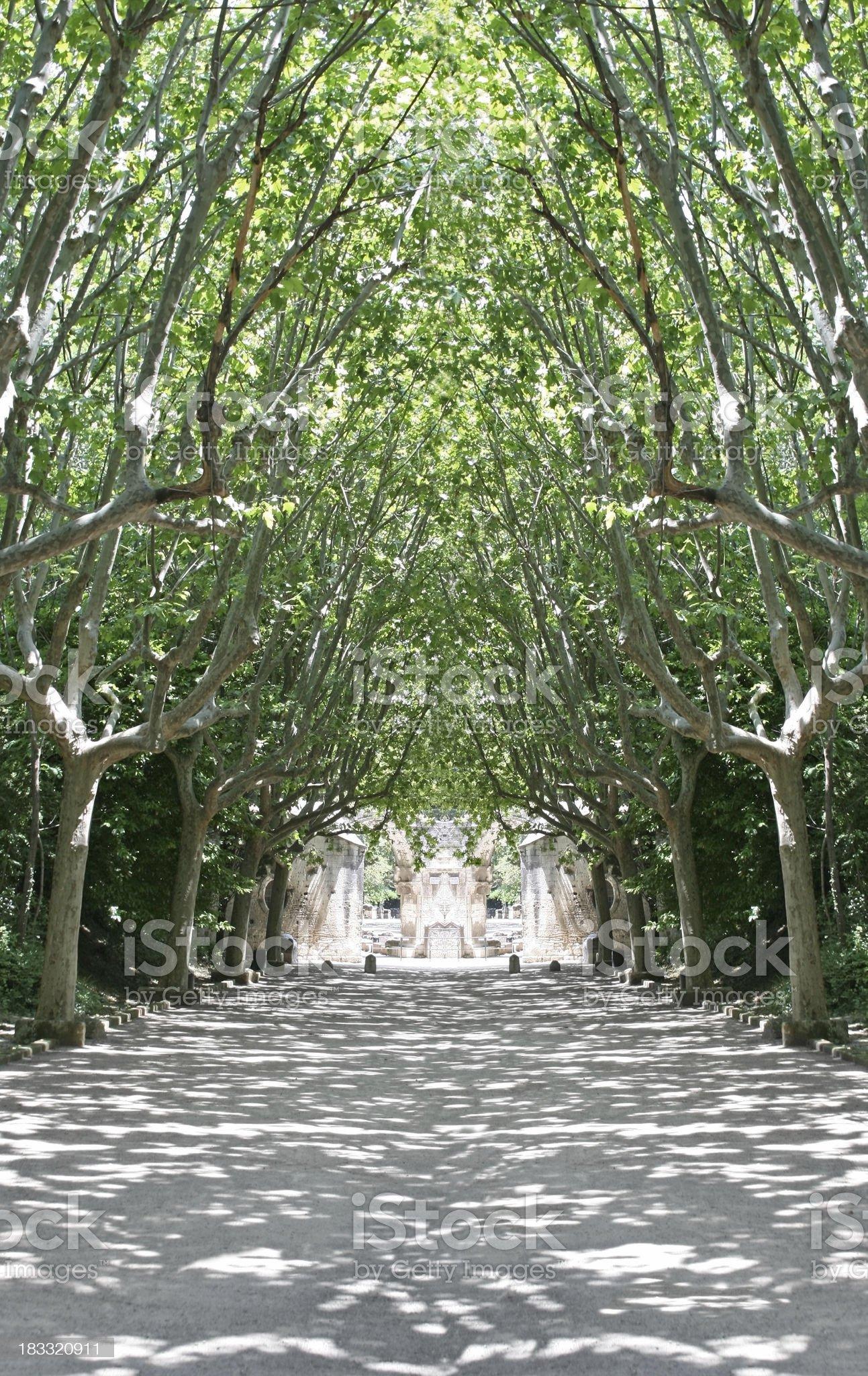 Treelined Gravel Path royalty-free stock photo