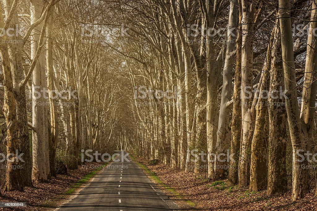 tree-lined highway royalty-free stock photo